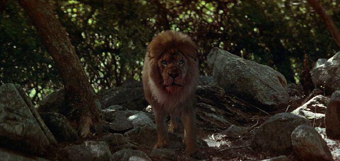 Найцікавіші фільми про левів, від яких неможливо відірватися 2