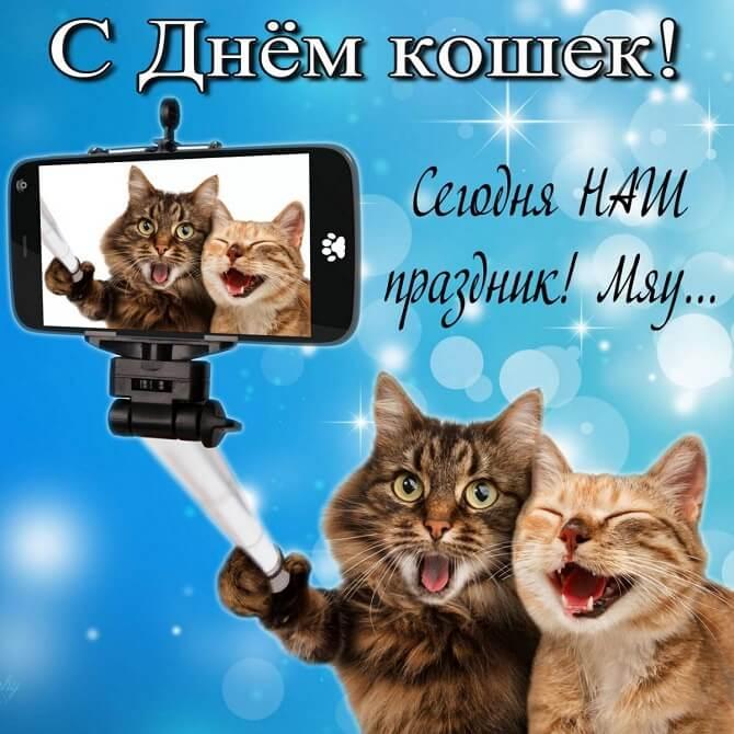 поздравления в день кошек