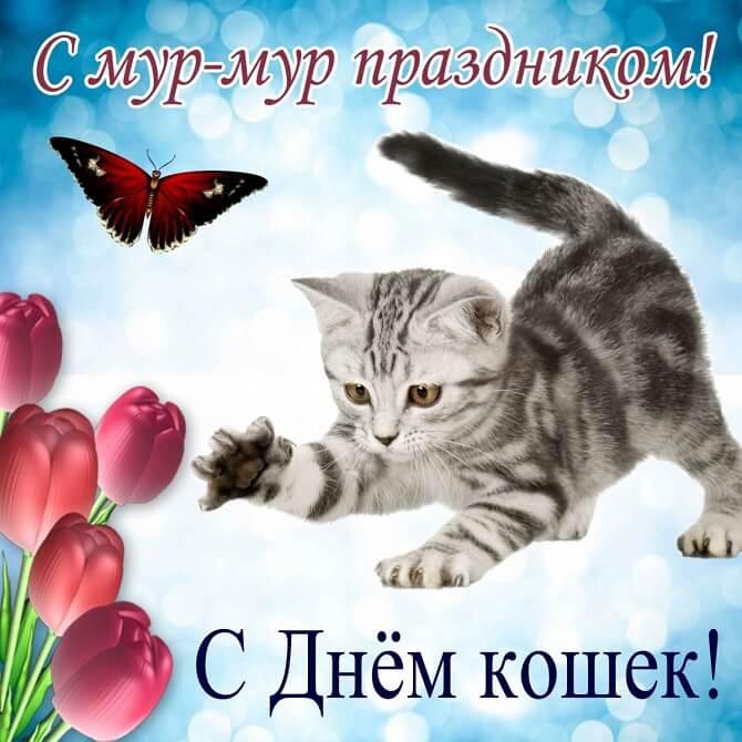 поздравления в день кошки 2020