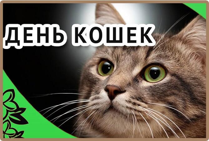 поздравления в день кота