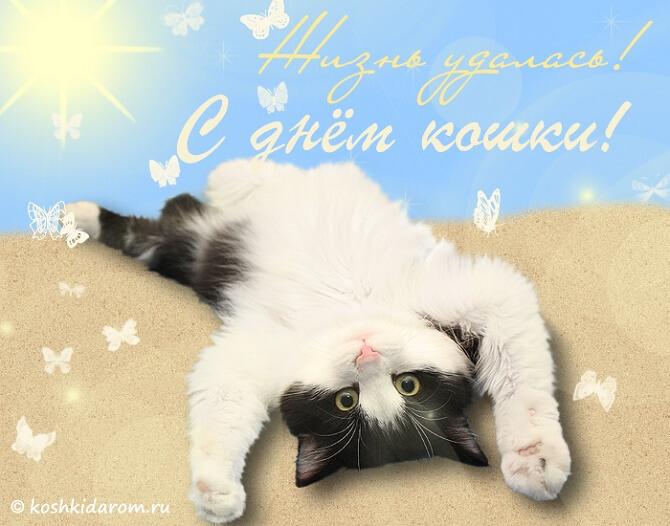 поздравления с днем кошек 2020