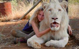 Самые занимательные фильмы про львов, от которых невозможно оторваться
