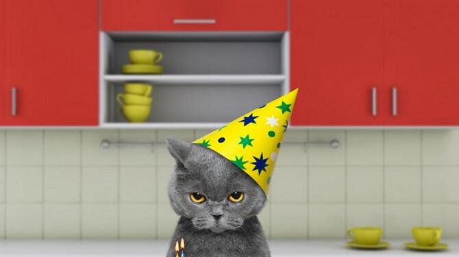 Привітання в День кішок