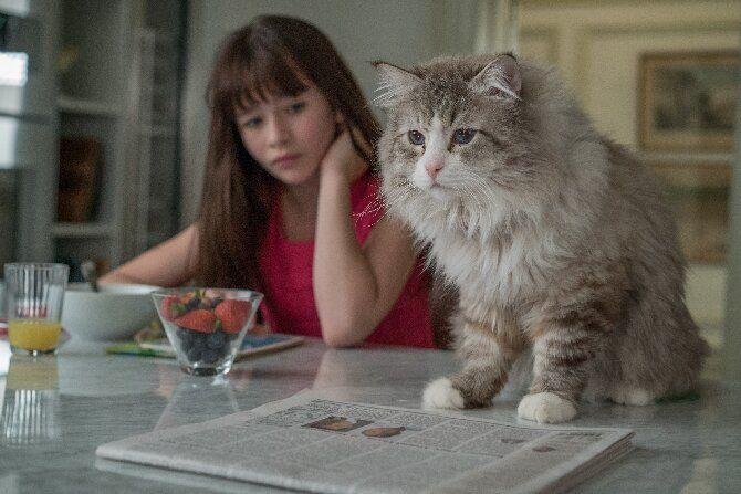 Топ-10 найкращих фільмів про кішок для сімейного перегляду 4