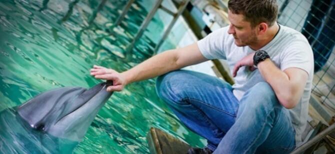 Самые красивые и познавательные фильмы про дельфинов 11