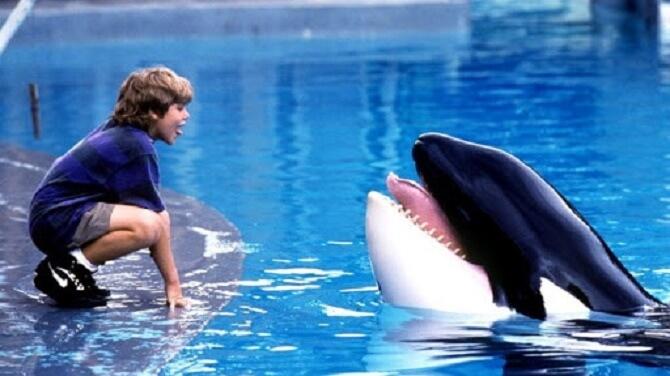Найкрасивіші і пізнавальні фільми про дельфінів 4