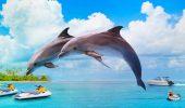 Найкрасивіші і пізнавальні фільми про дельфінів