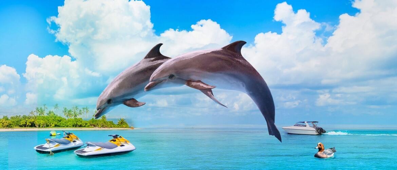 Самые красивые и познавательные фильмы про дельфинов