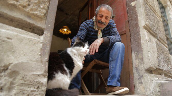 Топ-10 найкращих фільмів про кішок для сімейного перегляду 10