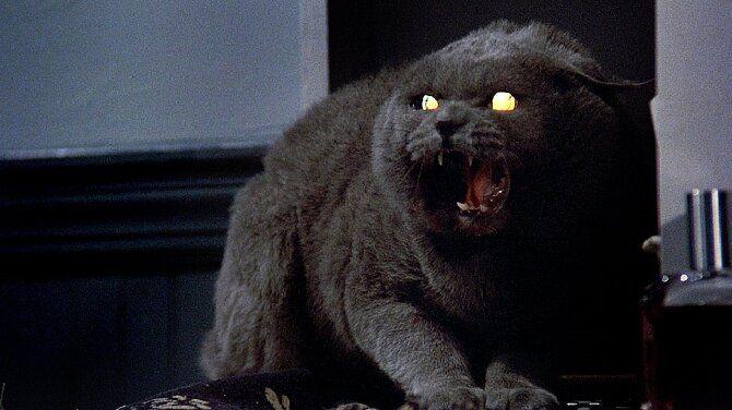 Топ-10 найкращих фільмів про кішок для сімейного перегляду 2