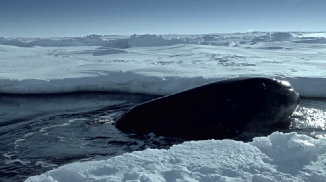 Найкрасивіші і пізнавальні фільми про дельфінів 10