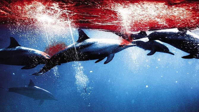 Найкрасивіші і пізнавальні фільми про дельфінів 8