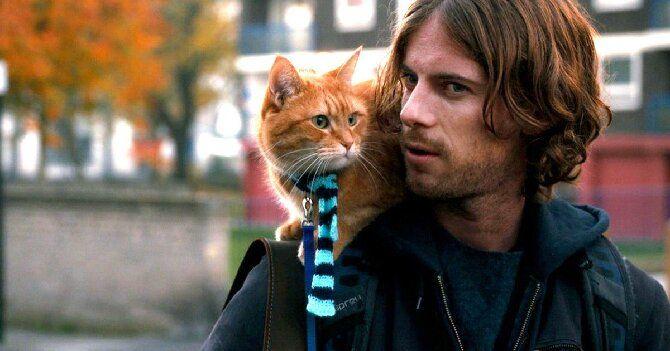 Топ-10 найкращих фільмів про кішок для сімейного перегляду 11