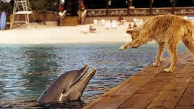 Самые красивые и познавательные фильмы про дельфинов 7