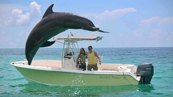 Самые красивые и познавательные фильмы про дельфинов 1
