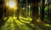 Яскраві привітання з Днем лісника