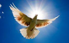 Международный день мира – красивые поздравления