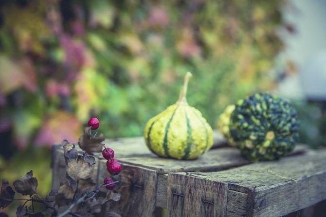 Ударим по осенним овощам и фруктам: сезонные продукты для здорового питания 1