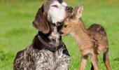 День защиты животных – оригинальные поздравления