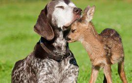 День захисту тварин – оригінальні привітання