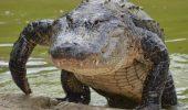 ТОП фільмів про крокодилів, які не можна пропустити