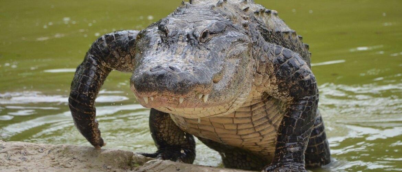 ТОП фильмов о крокодилах, которые нельзя пропустить
