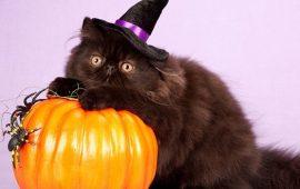 Страшенно милі: коти і Геловін
