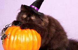 Ужасно милые: коты и Хэллоуин