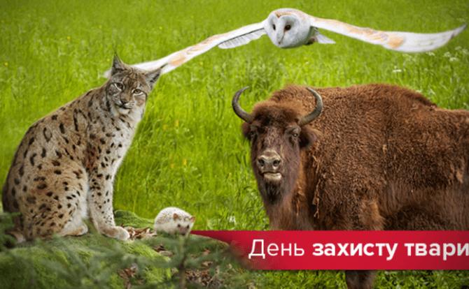 День захисту тварин – оригінальні привітання 4