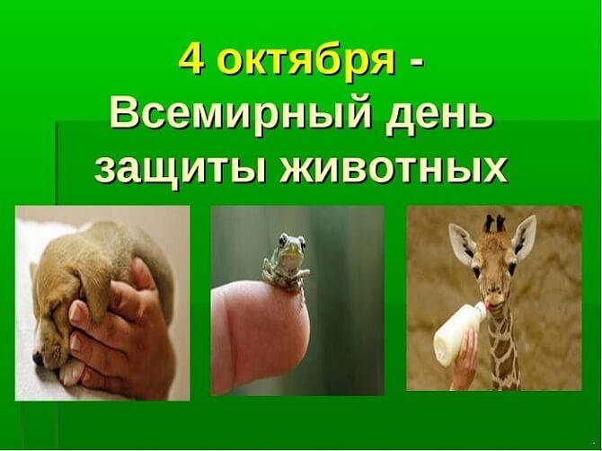 День защиты животных – оригинальные поздравления 2