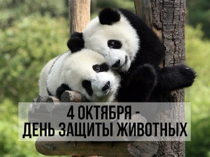День защиты животных – оригинальные поздравления 5