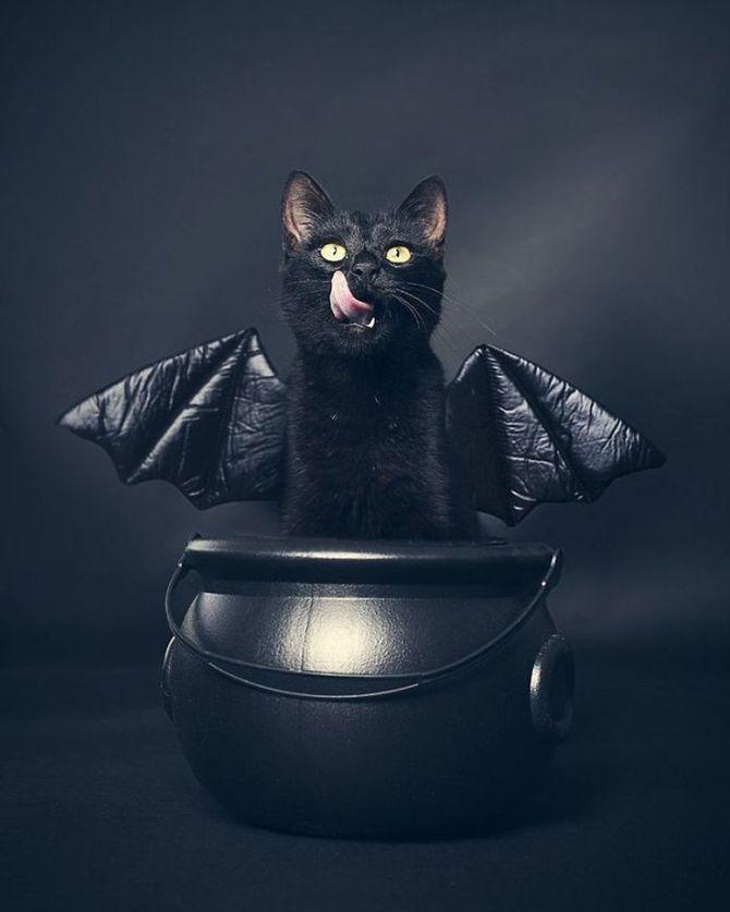Страшенно милі: коти і Геловін 1
