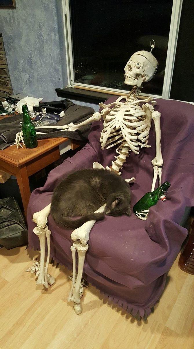 Страшенно милі: коти і Геловін 29