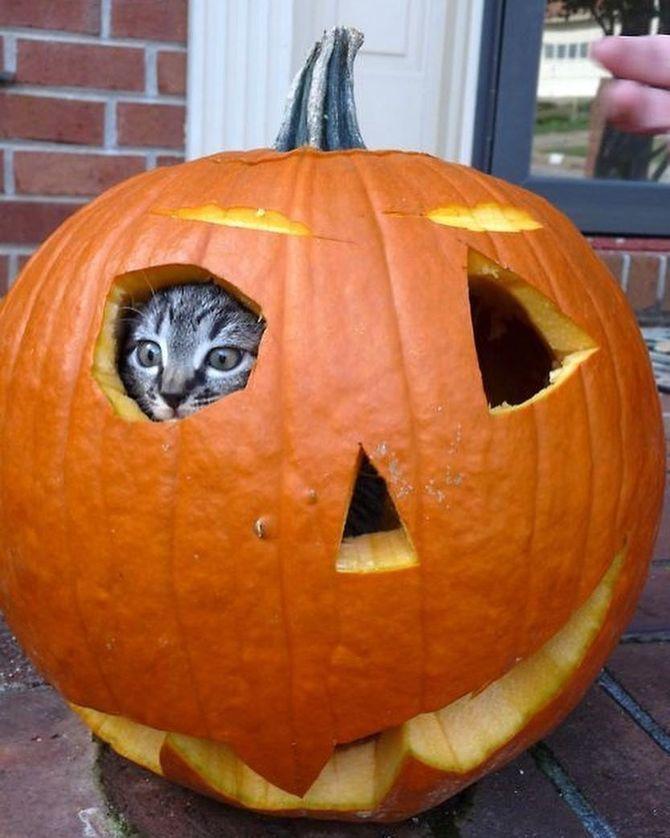 Ужасно милые: коты и Хэллоуин 4