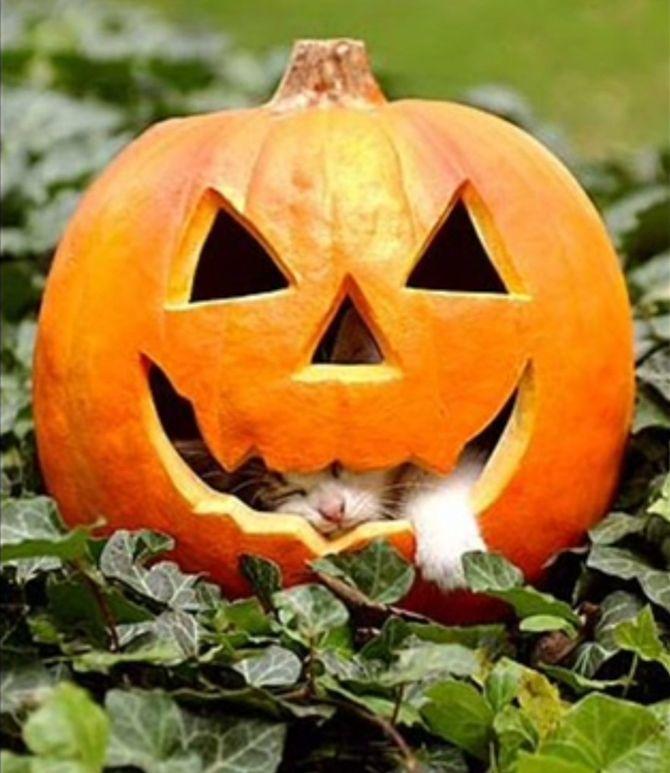 Ужасно милые: коты и Хэллоуин 6