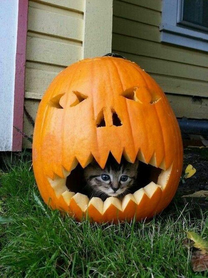 Страшенно милі: коти і Геловін 7
