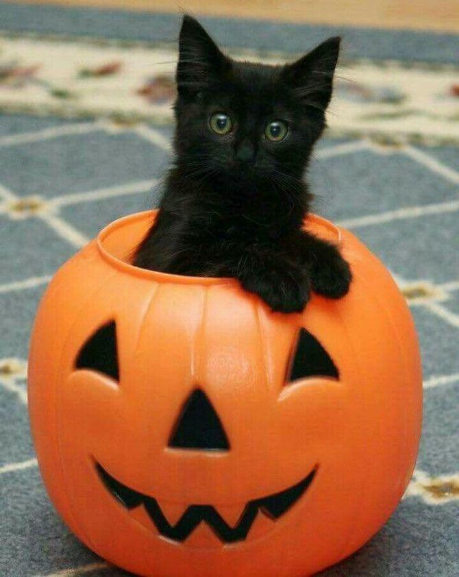Страшенно милі: коти і Геловін 10