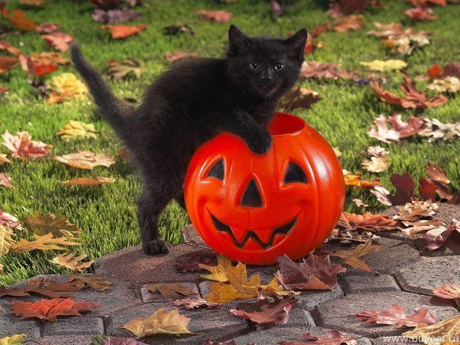 Страшенно милі: коти і Геловін 11
