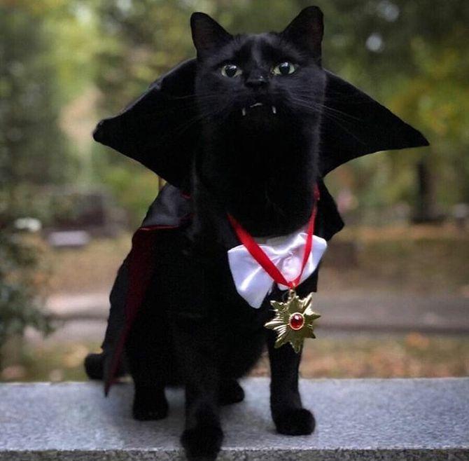 Страшенно милі: коти і Геловін 17