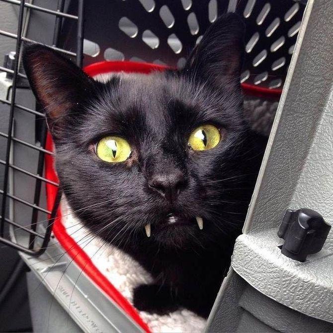 Ужасно милые: коты и Хэллоуин 18