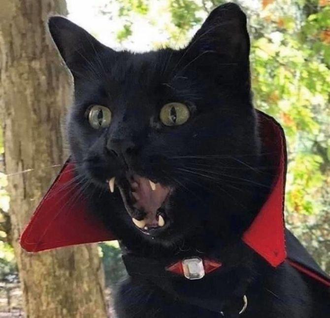 Страшенно милі: коти і Геловін 19