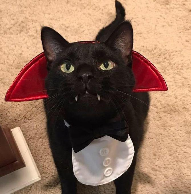 Ужасно милые: коты и Хэллоуин 20
