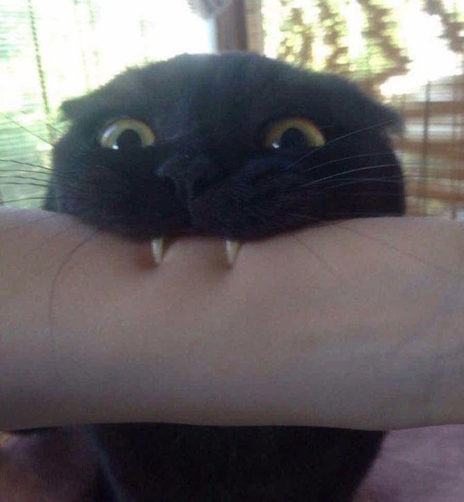 Ужасно милые: коты и Хэллоуин 21