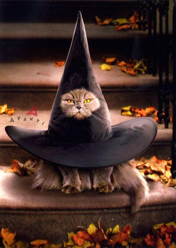 Ужасно милые: коты и Хэллоуин 12