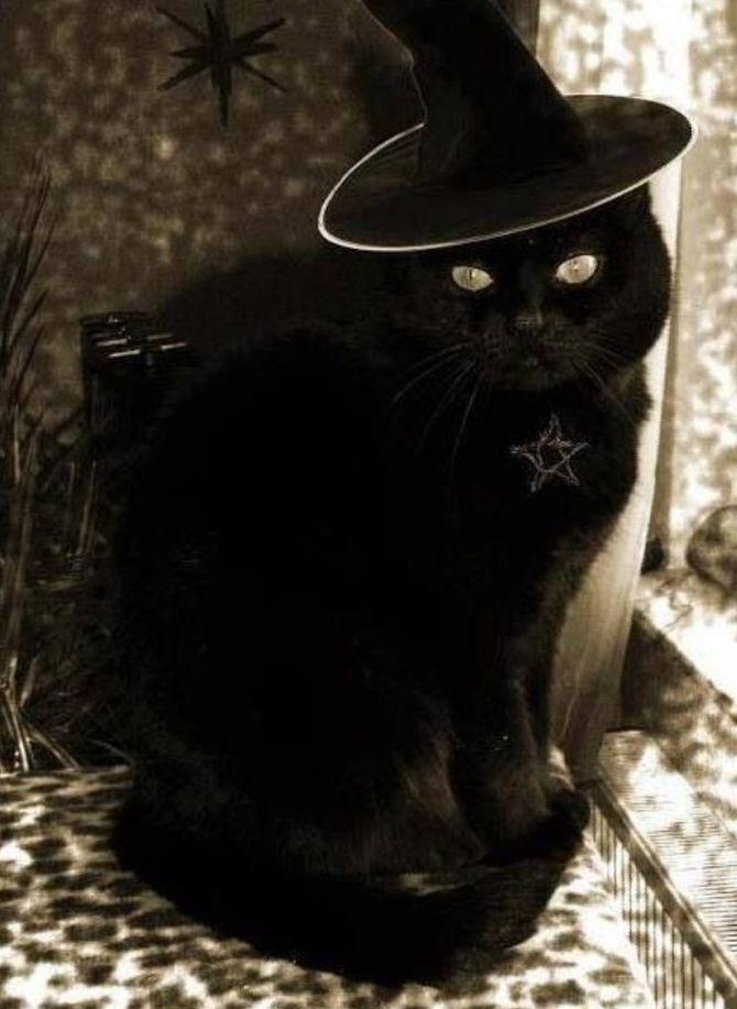 Ужасно милые: коты и Хэллоуин 13