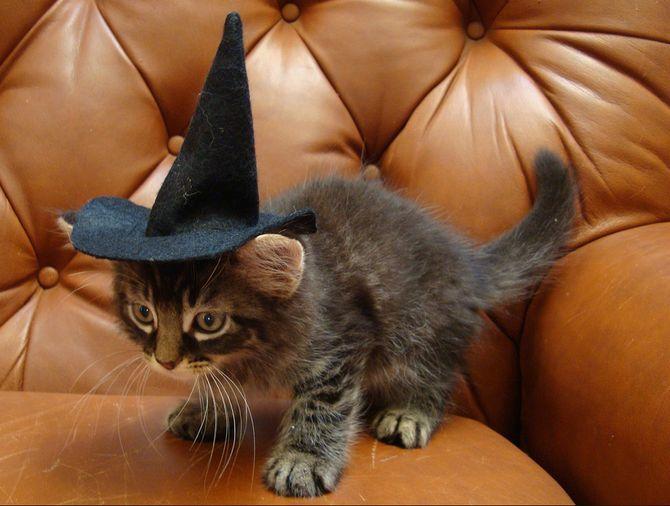 Страшенно милі: коти і Геловін 14