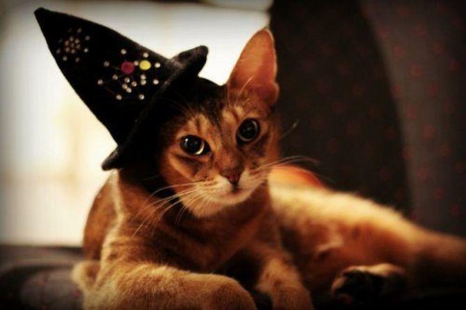 Страшенно милі: коти і Геловін 15