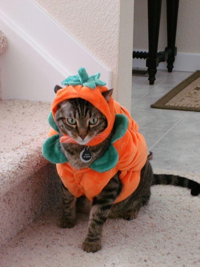 Ужасно милые: коты и Хэллоуин 22