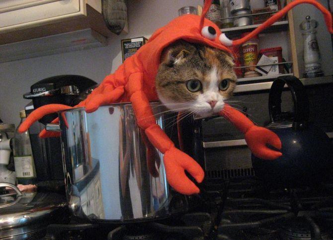 Ужасно милые: коты и Хэллоуин 23