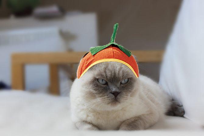 Ужасно милые: коты и Хэллоуин 24